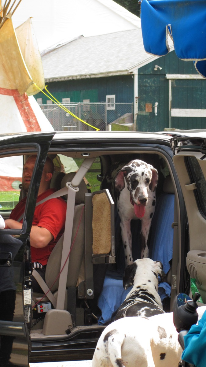 Great Dane Service Dog Project Facebook
